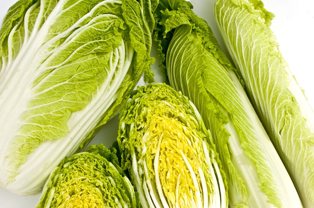 isotonic concentration of lettuce and chinese cabbage Chinese cabbages, which include the napa types, combine the thin, crisp texture  of lettuce with the fresh peppery tang of juicy cabbage this group of cabbages.