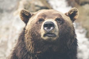 Three Steps to Protect Your Portfolio From the Next Bear Market